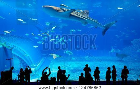 Silhouettes of people and giant whale shark in Oceanarium