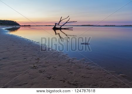 Bird footprints and beautiful driftwood at sunrise. Snowy River mouth, Marlo, Victoria, Australia