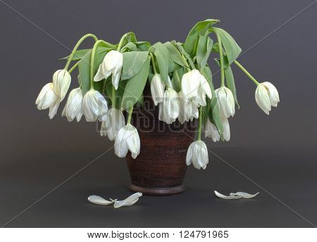 Vase full of droopy and dead flowers white tulips