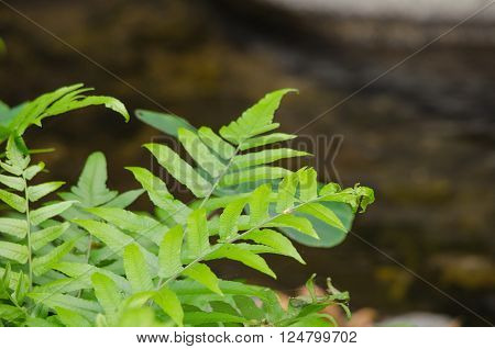 green leaf background in forest have many species flora . background have many colour in frame