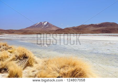 South America - The surreal landscape in the Eduardo Avaroa National Reserve of Andean Fauna near Chilean border. The picture present Laguna Hedionda