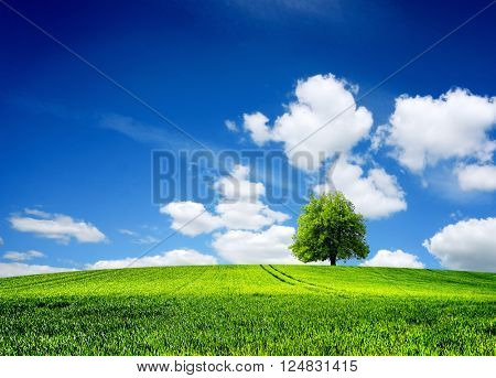 Field of grass spring landscape