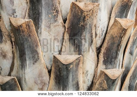 Closeup surface trunk of palm tree background