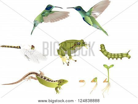 It is illustration of green nature and animals.