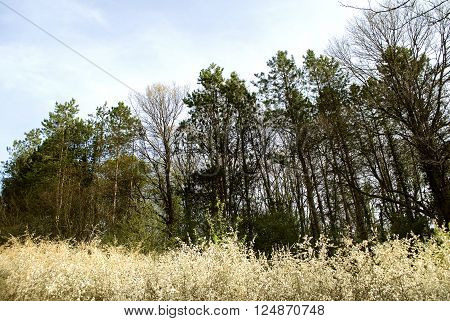 Scenic mixed forest with spring Sun casting its warm rays trough the foliage. Sunlight in the green forest. Sunlit spruce Springtime. Tree gazing in woods.