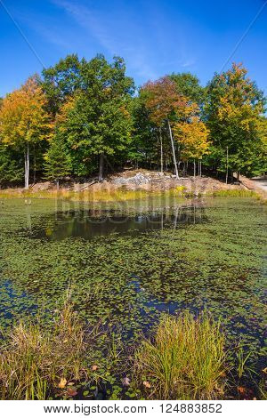 Yellow  leaves in zoological park  in Canada. Adorable little lake overgrown with water plants