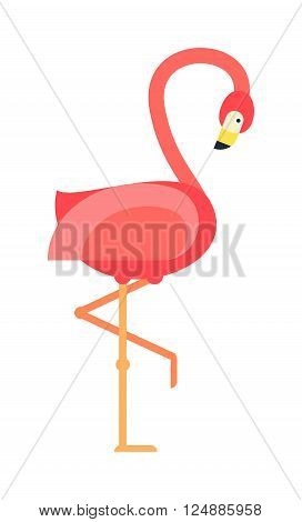 Pink flamingo and wild flamingo animal. Flamingo colorful african beauty exotic animal. Nature flamingo tropicbird. Cool pink decorative flat lovely flamingo exotic zoo animal vector illustration.