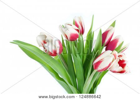 Bouquet of variegated tulips, isolated on white