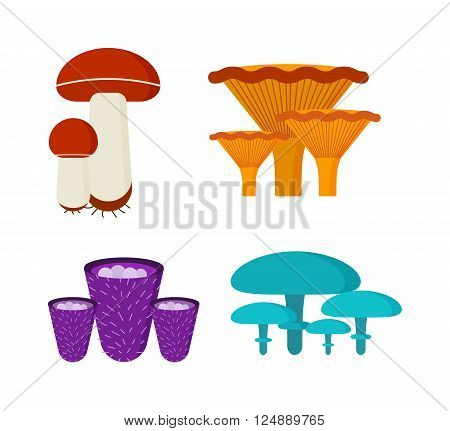 Mushrooms vector illustration set. Different types of mushrooms isolated on white background.