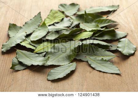 Heap of fresh green bay leaves