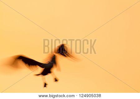 Backlit Brown Pelican motion blur - 1/30 sec. exposure