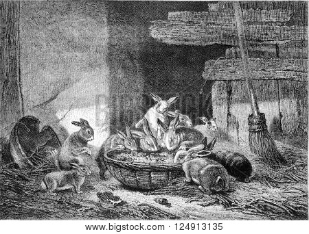 Painting Exhibition of 1857. Lunch rabbits, vintage engraved illustration. Magasin Pittoresque 1857.