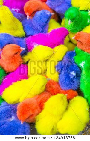 Colorful chickens in a box.