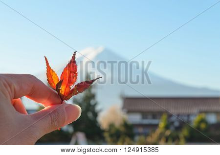 Red japanese maple leaf in hand and mount fuji background (Selected focus blur background)