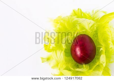 red easter egg on green feathers, white background