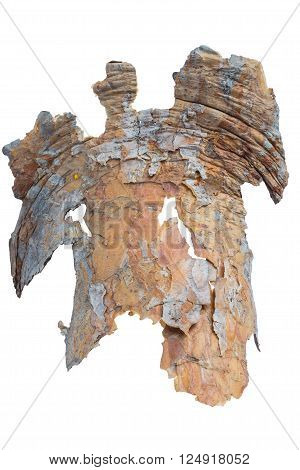 closeup tree bark isolated on white background