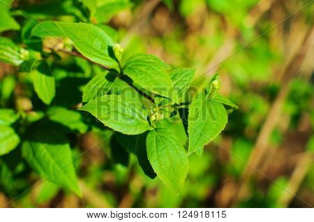 green leaf background in spring sunny day