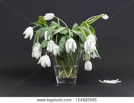 Vase full of droopy and dead flowers, white tulips