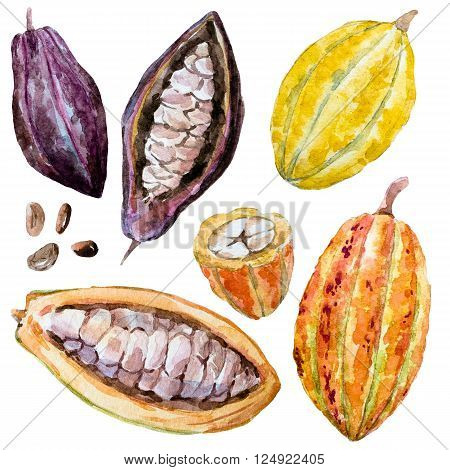 Beautiful image with nice hand drawn watercolor cacao beans