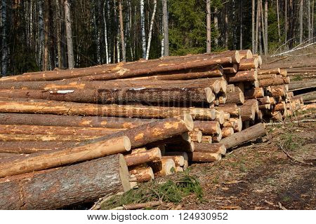 Stacks of cut trees stacked in the winter in the Northern forest. Cut down the trees. Pine wood industry. Fallen trees. Felling and cutting of forests. Supply of tree trunks.