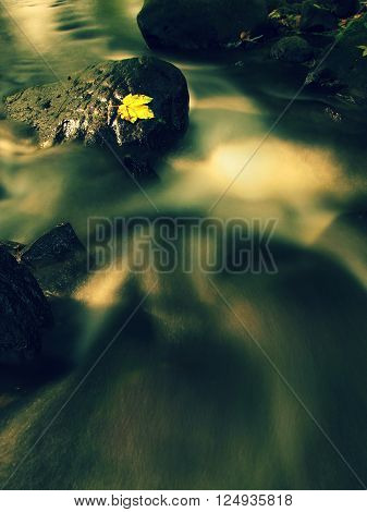 Gravel In Water Of Mountain River Covered By Colorful Aspen And Beech Leaves. Fresh Green Leaves On