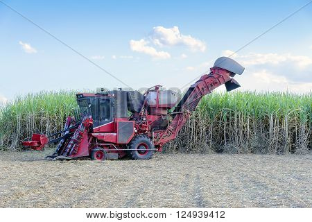the sugar cane  harvest machine in the field