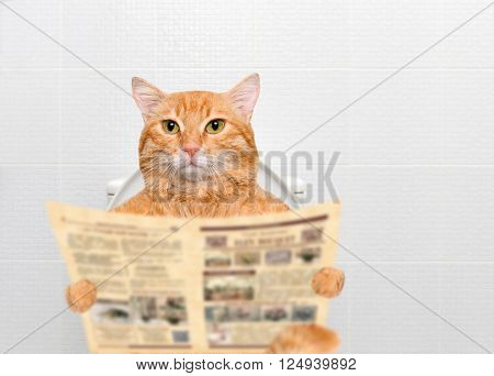 Beautiful red cat with a newspaper in a toilet.