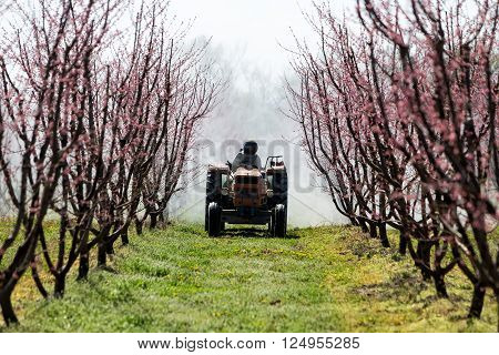 Veria Greece - March 19 2016: Farmer with tractor using a air blast sprayer with a chemical insecticide or fungicide in the orchard of peach trees in northern Greece