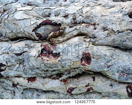 Horizontal photo of tree bark texture. Wood surface photo of huge rustic weathered tree bark with many cracks.