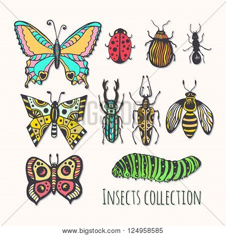 Colorful insects collection. Hand drawn set for icons logo or print. Vector illustration.
