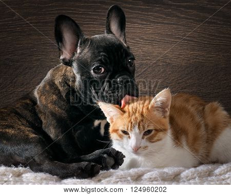 Dog licking cat. Cute, cute animals. Snouts large. Language pink. Dog Bulldog, thoroughbred, black. Cat small, white with red