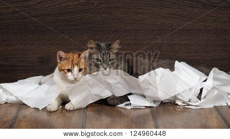 Funny cat and kitten playing with the toilet paper on the floor. Cat large, gray. Kitten small, fur is white with red. Paper crumpled, torn