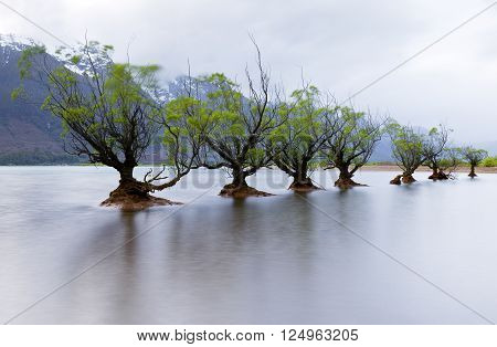 A row of willow trees at Glenorchy, New Zealand