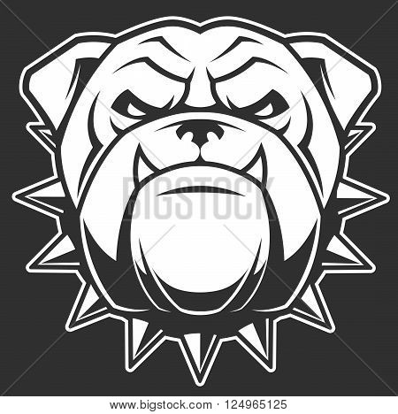 Vector illustration head ferocious bulldog mascot on a black background
