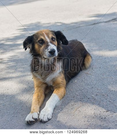Outdoor portrait of adorable cross-breed dog looking seriously