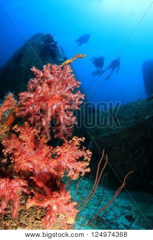 Coral reef and scuba divers in ocean