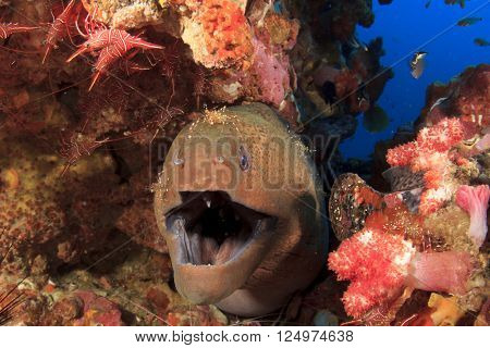 Moray Eel and Cleaner shrimps