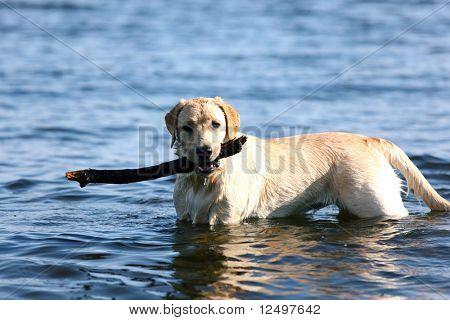 happy dog play