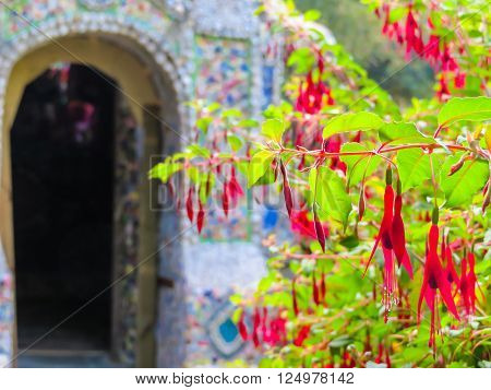 Blossoming fuchsia and mosaic wall as background. Little Chapel, Guernsey Island, Channel Islands