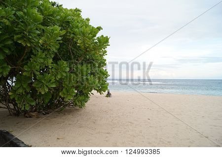 Large green bush on a sunny day on the beach
