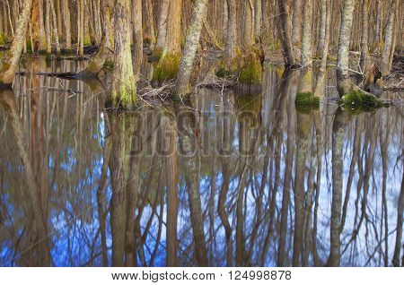 Backwater on the Lumber River in North Carolina in the winter