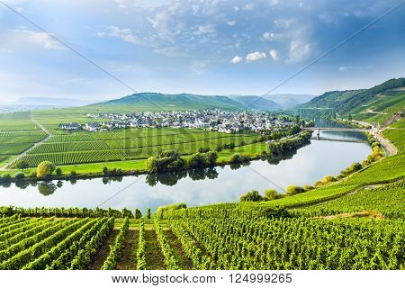 famous Moselle Sinuosity in Trittenheim Germany with blue sky