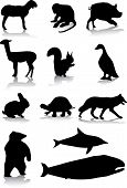Animal Silhouettes poster
