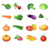 Set of colorful isolated vegetables for calorie table illustration