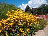 foto of xeriscape  - garden flowers - JPG