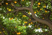 stock photo of tree leaves  - under the lemon tree in a park in nice italy - JPG
