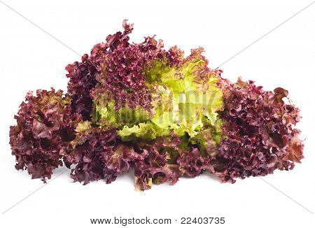Red lettuce Leaves on white background