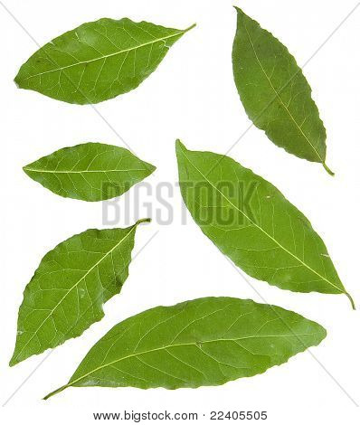 Collection bay leaves