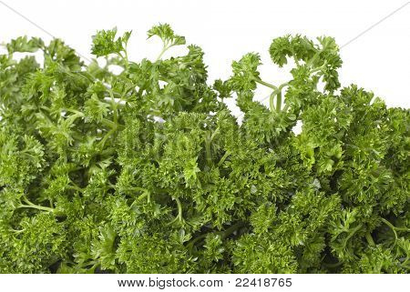 resh parsley on white background