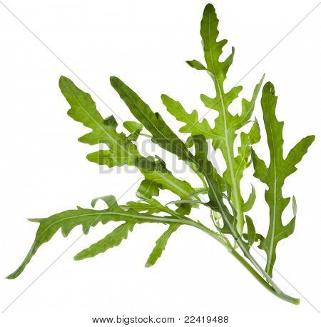 Leaves of the lettuce of rucola (Arugula), isolated on white